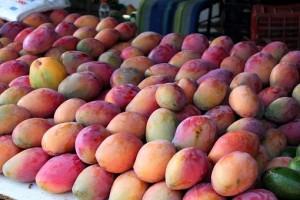 mangoes-354062__340